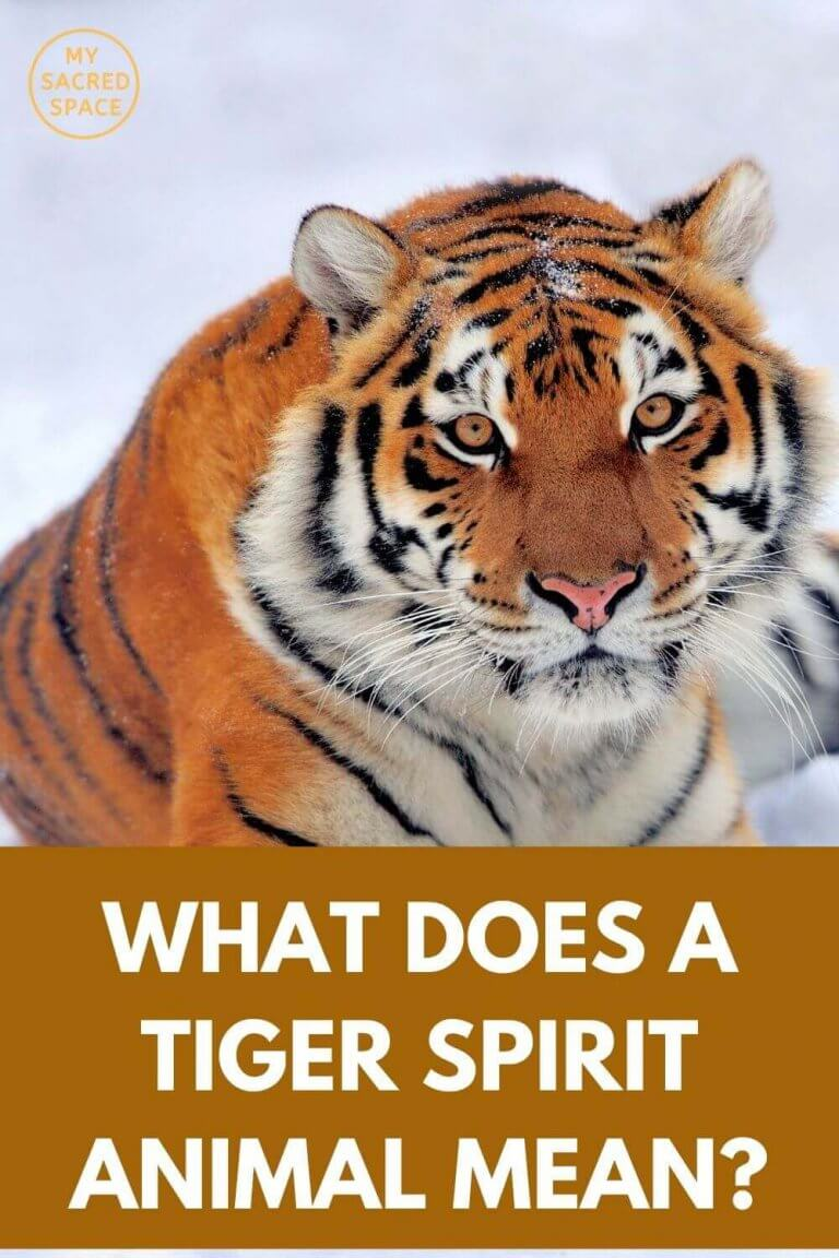 What Does a Tiger Spirit Animal Mean and Symbolise? - My